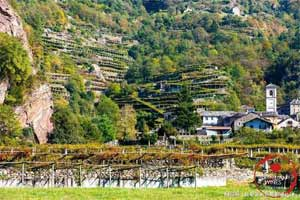 奥斯塔山谷葡萄酒