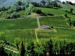 马尔凯葡萄酒产区