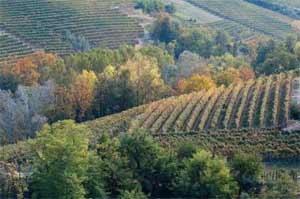 莫利塞葡萄酒产区