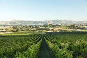 坎特伯雷葡萄酒产区