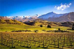中奥塔哥葡萄酒产区