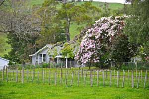吉斯伯恩葡萄酒产区